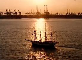 royal albatross in dawn