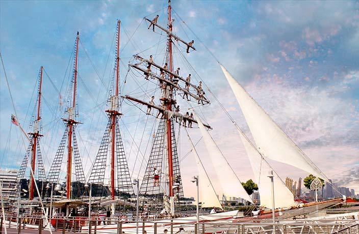 mast climb on royal albatross